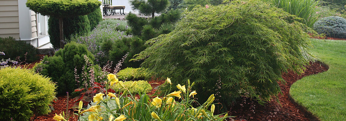 Specimen Trees & Foundation Plantings
