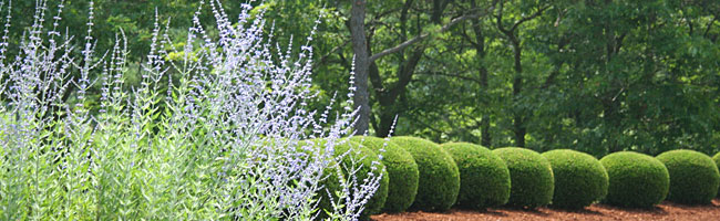 South Shore & Cape Cod landscape maintenance and gardening