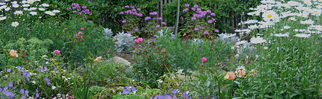 Cape Cod landscape renovation planning
